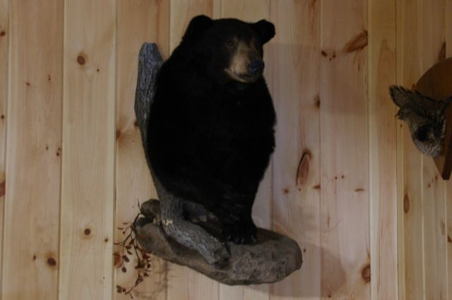Why Hire a Bear Hunting Guide in Maine